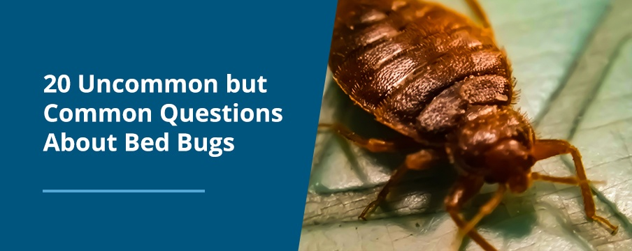 Questions About Bed Bugs