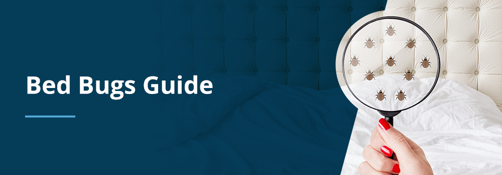 Homeowners Guide to Bed Bugs