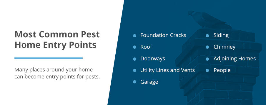 Common Home Entry Points for Pests