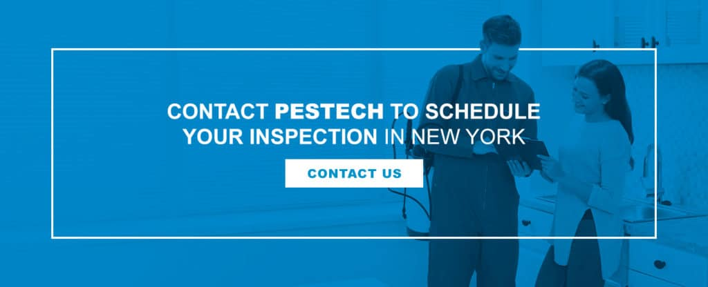 Contact Pestech for Home Inspection