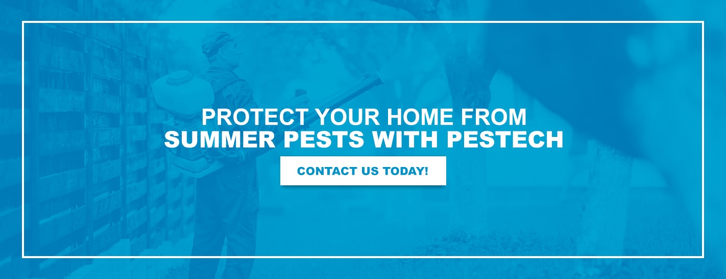 Protect Your Home From Summer Pests With Pestech