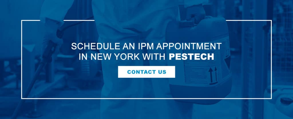 Contact Pestech - IPM Services