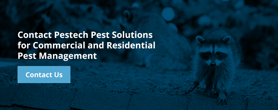 Contact Pestech Pest Control