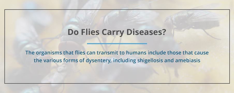 Do Flies Carry Diseases?