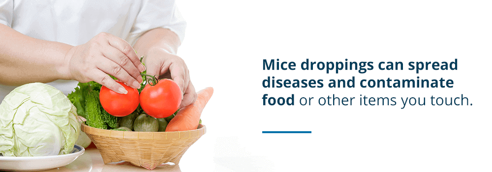 Can you get sick from mouse droppings