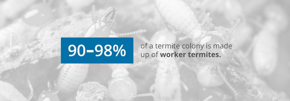 Termite Colonies Statistic