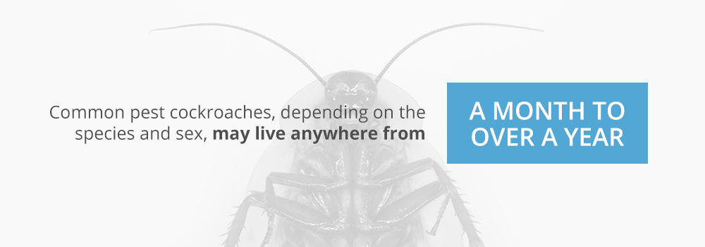 How Long Can Cockroaches Live