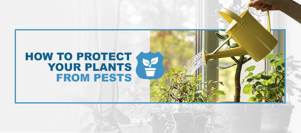 Protect House Plants From Pests