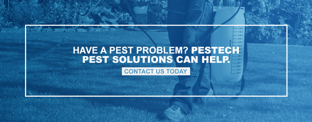 Have a Pest Problem? Pestech Pest Solutions Can Help.