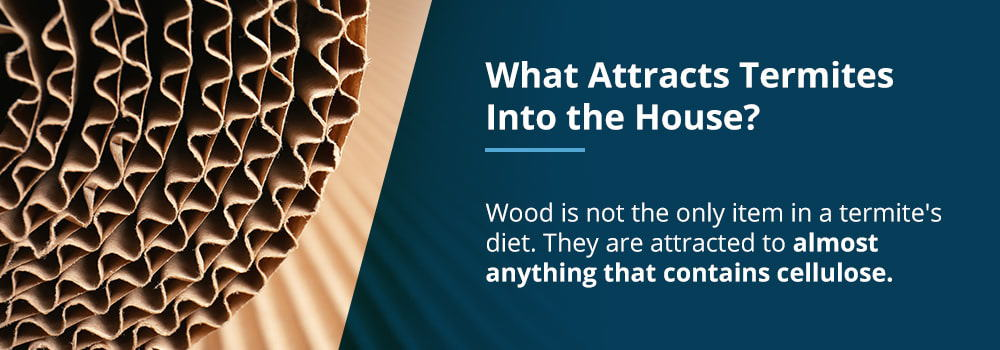 What Attracts Termites