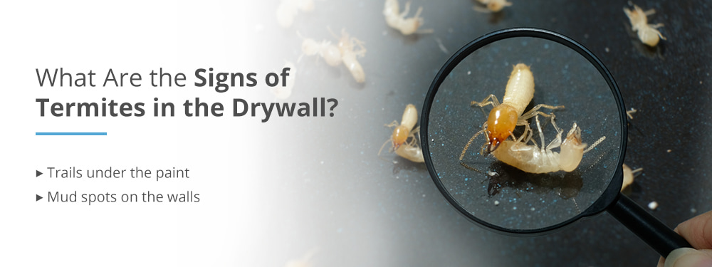Signs of Termites in Drywall