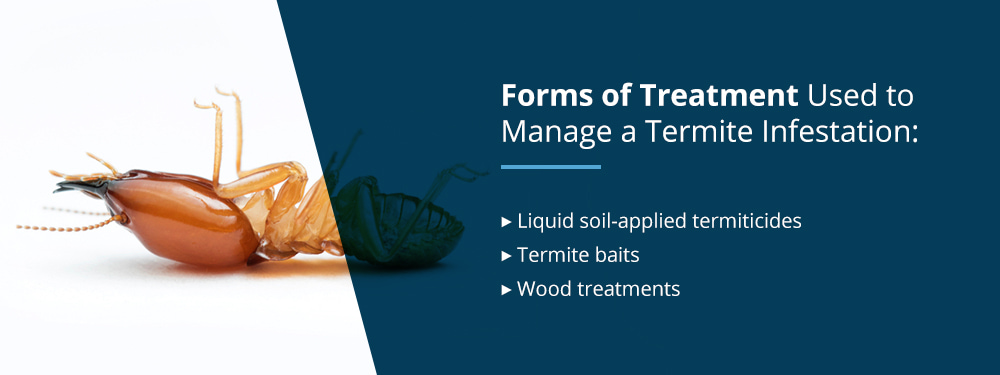 How to Treat for Termites