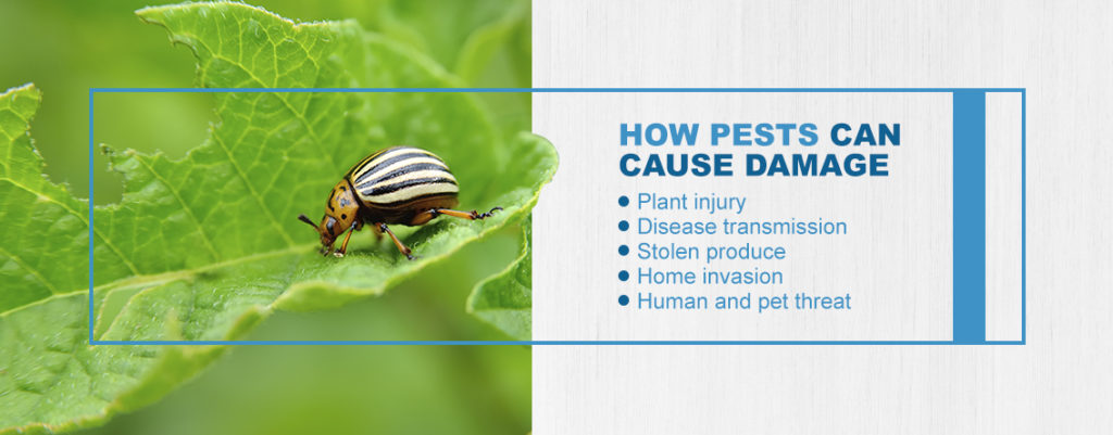 How Pests Can Cause Damage