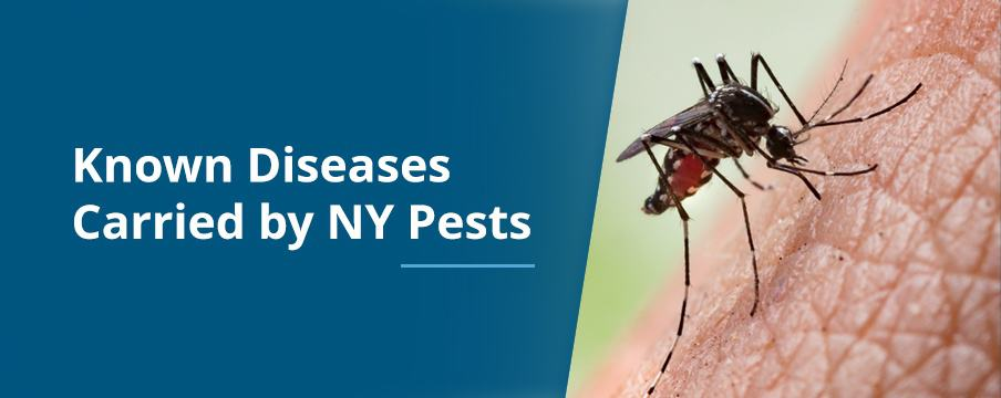 Known Diseases Carried by NY Pests