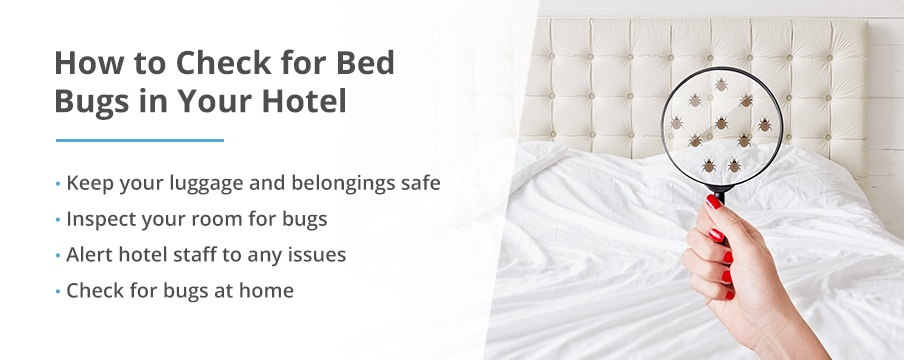 How to Check for Bed Bugs Hotel