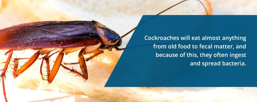 Cockroaches Eat Anything