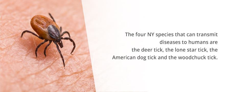 Tick Species in NY