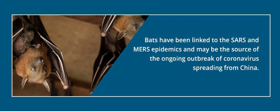Bats Source of COVID