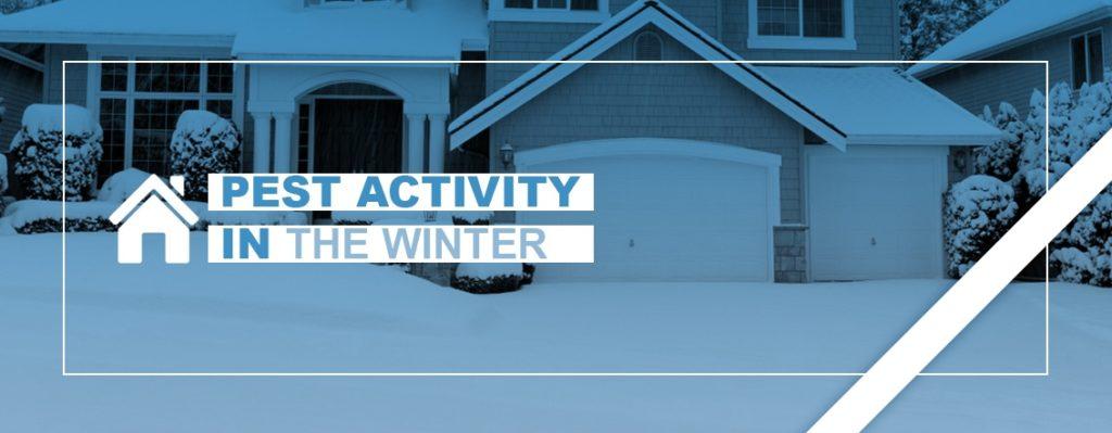 Pest Activity in Winter