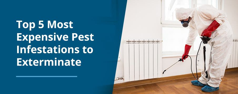 Most Expensive Pests to Exterminate