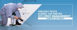 Pevent Pests in Winter