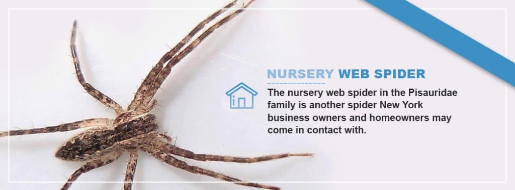 Nursery-Web-Spider