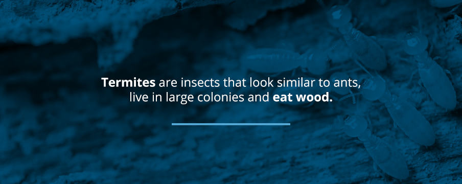 Termites About
