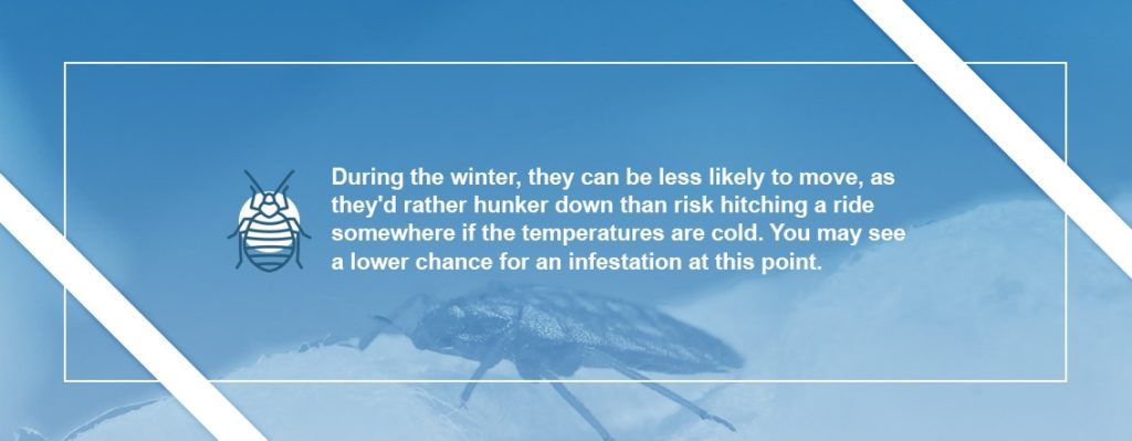 Bed Bugs Activity in Winter
