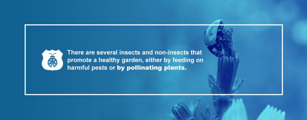 Pests Help Garden