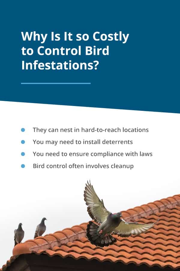 Why Bird Control Costly
