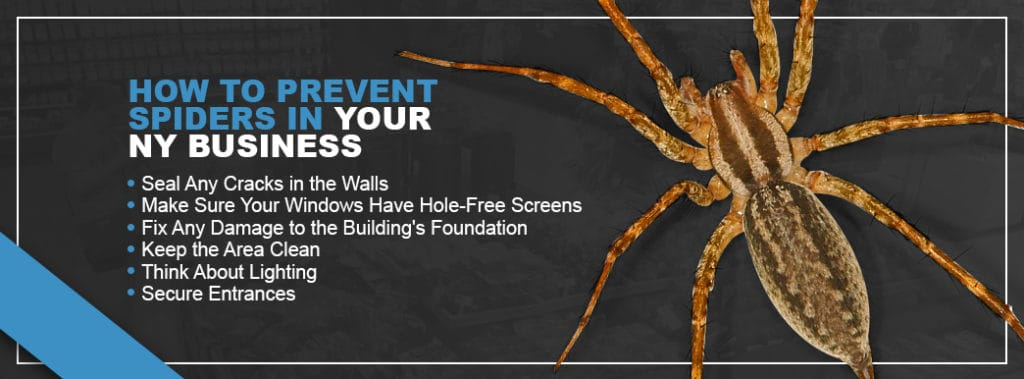Prevent Spiders in Business