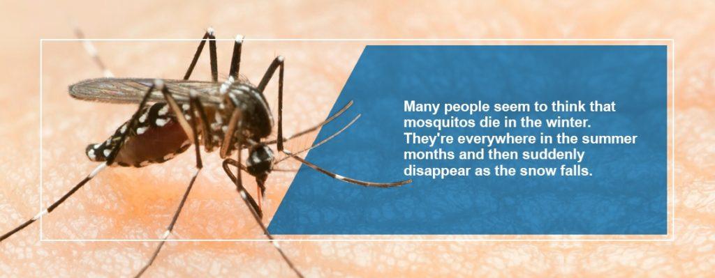 Mosquito Activity in Winter