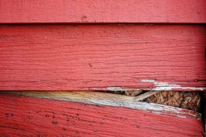 Pest Entry Points: Siding