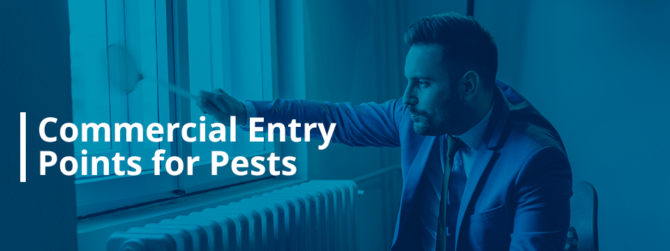 commercial entry points for pests