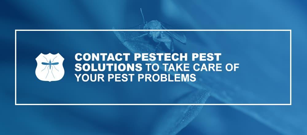 Contact Pestech Pest Control