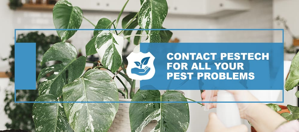 Contact Pestech Pest Control Company