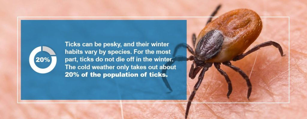 What Happens to Ticks in the Winter