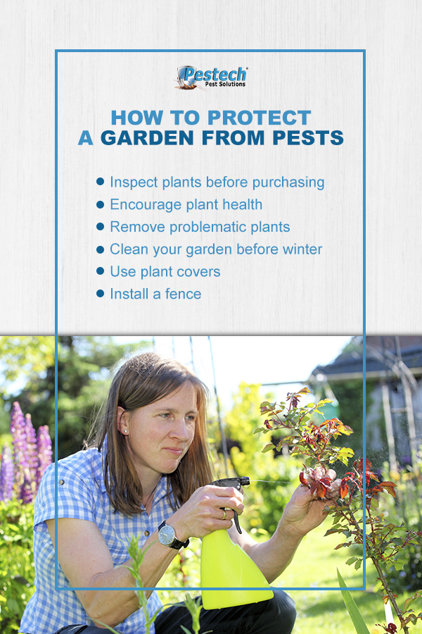 How to Protect a Garden From Pests