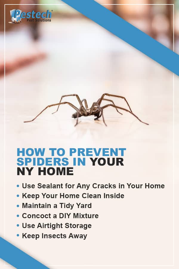 Prevent Spider Home Infestation