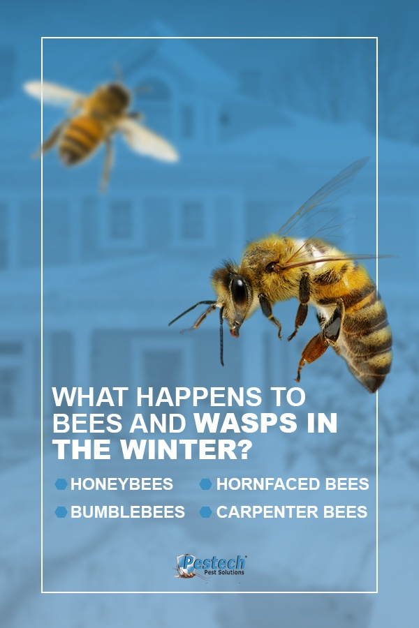 What Happens to Bees and Wasps in the Winter