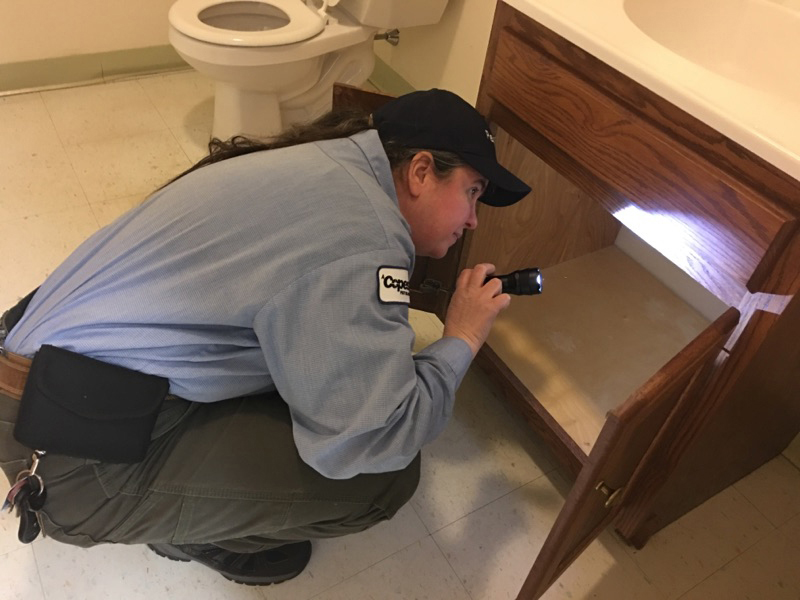 checking for pests in a drawer with a flashlight