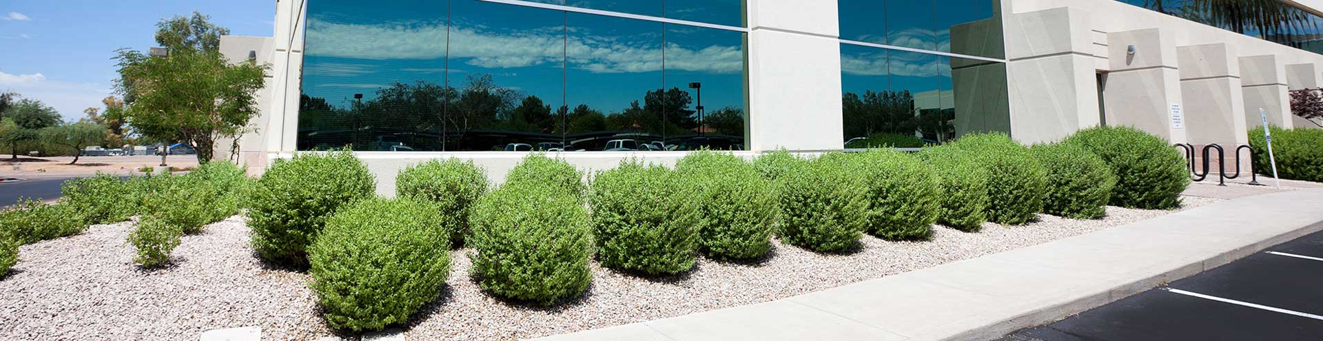 Bushes and shrubs in front of an office building with tinted glass windows.